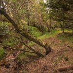 4 woodland f