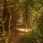 4 woodland cut copy