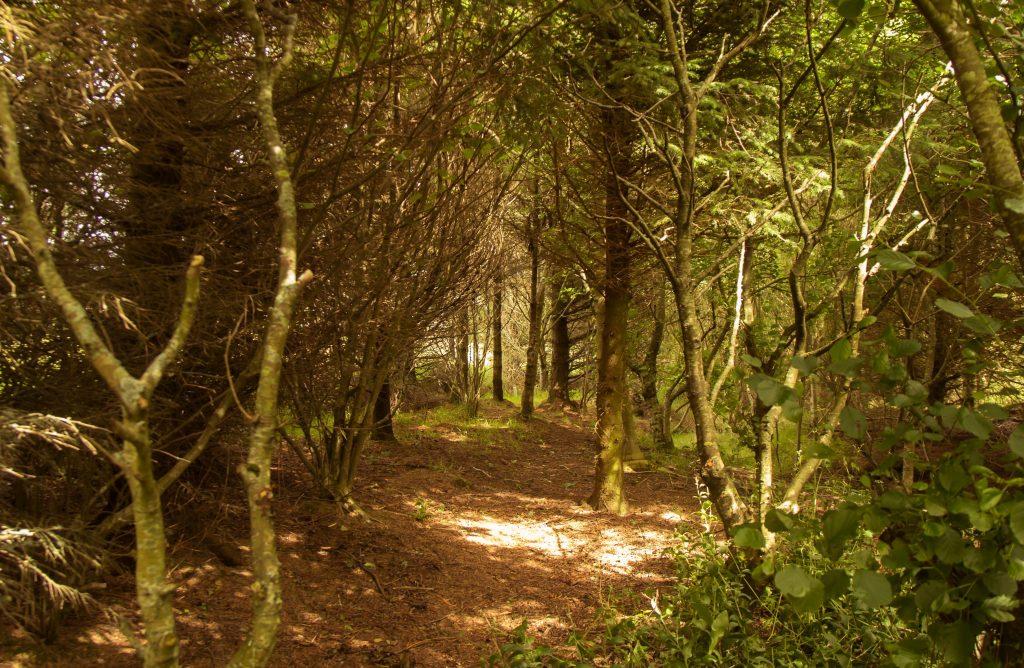 4 woodland cut copy x2