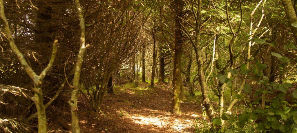 4 woodland cut copy x3