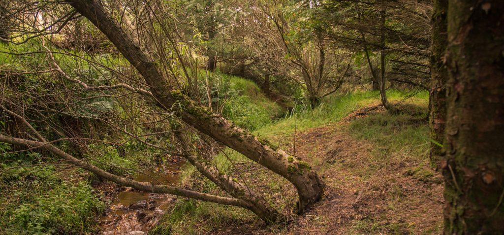 4 woodland f smallx1