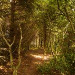 4 woodland e